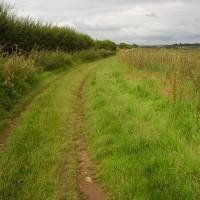 M4 Junction 17 dog walk and dog-friendly pub, Wiltshire - Dog walks in Wiltshire