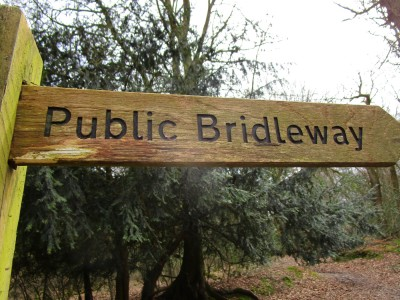 A25 woodland dog walk near Dorking, Surrey - Driving with Dogs
