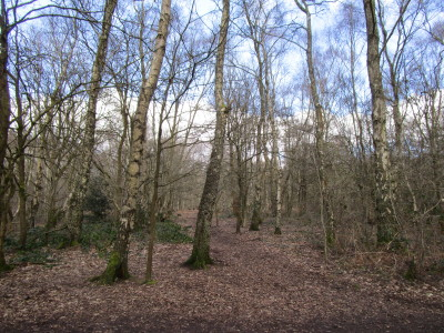 Big Common dog walks, Staffordshire - Driving with Dogs