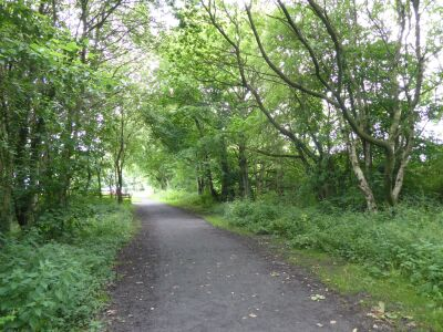 A688 Dog walk near Spennymoor, County Durham - Driving with Dogs