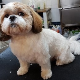 Hair & Hounds Dog Grooming, Bristol, Somerset - Driving with Dogs