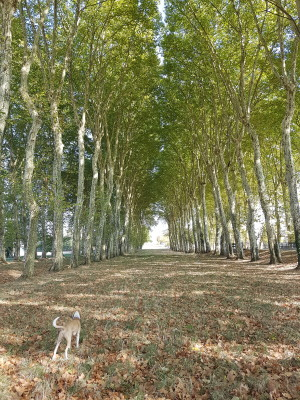 20181008_152041.jpg - Driving with Dogs