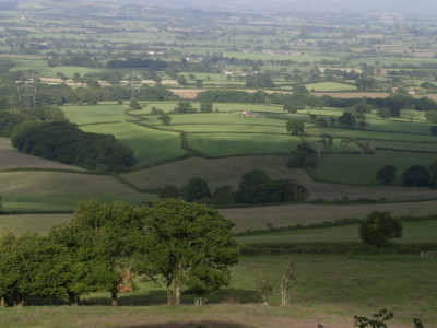 Marshwood Vale dog walk and dog-friendly B&B, Dorset - Driving with Dogs