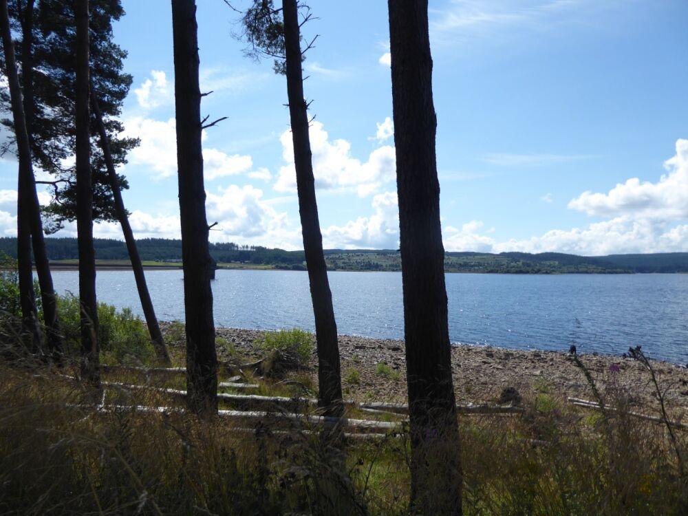 Lakeside dog walk with no sheep or stiles, Northumberland - Dog walks in Northumberland