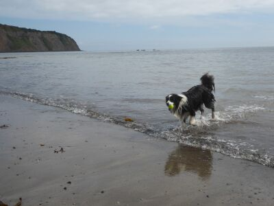Robin Hoods Bay dog-friendly beach, North Yorkshire - Driving with Dogs