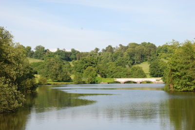 A gentle amble in the park with the dog, Devon - Driving with Dogs