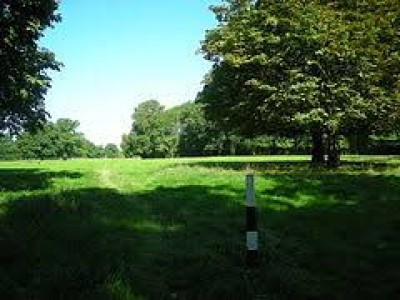 A24 dog walk and dog-friendly pub near Horsham, West Sussex - Driving with Dogs