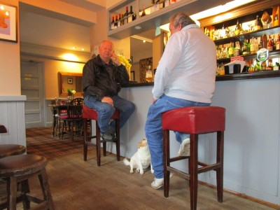 A287 Lower Bourne dog-friendly pub, Surrey - Driving with Dogs