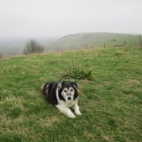 A273 Beacon walk and dog-friendly pub, East Sussex - Dog-friendly pub with dog walk Sussex.JPG