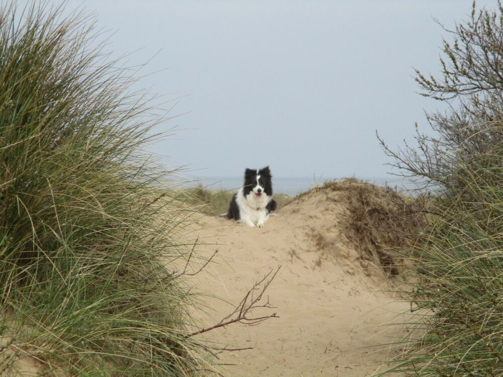 Holme next the sea dog-friendly beach, Norfolk - Norfolk dog-friendly beaches.JPG