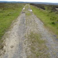 Cow Wath Bank dog walk, North Yorkshire - Yorkshire dog walks