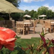 M25 Dog walk and dog-friendly pub near Barnet, Hertfordshire - Driving with Dogs