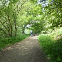 Whisby Nature Park dog walk near Lincoln, Lincolnshire - Dog walks in Lincolnshire