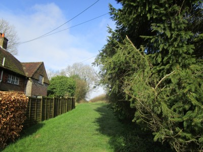 Dog-friendly pub and walk in the High Weald, West Sussex - Driving with Dogs