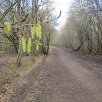 Woodland dog walk near Claygate, Kent - Kent dog walks.JPG