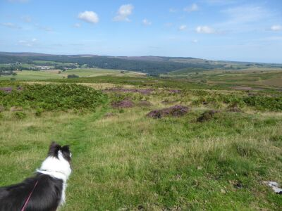 A697 A dog walk on St Oswalds Way, Northumberland - Driving with Dogs