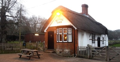 A31 woodland walkies and dog-friendly pub, Hampshire - Driving with Dogs