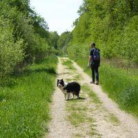 A quiet woodland dog walk, Lincolnshire - Lincolnshire dog walks