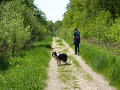 A quiet woodland dog walk, Lincolnshire - Driving with Dogs