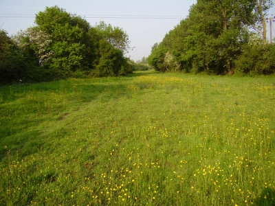 M11 Junction 7 dog walk and dog-friendly pub near Epping, Essex - Driving with Dogs