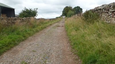 Dog-friendly country pub and short walk near Carlisle, Cumbria - Driving with Dogs