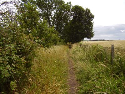 Shakespeare country dog walk and cafe, Warwickshire - Driving with Dogs