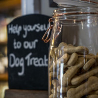 Dog-friendly country dining and dog walk in the Chess Valley, Hertfordshire - Hertfordshire dog-friendly pub.jpg