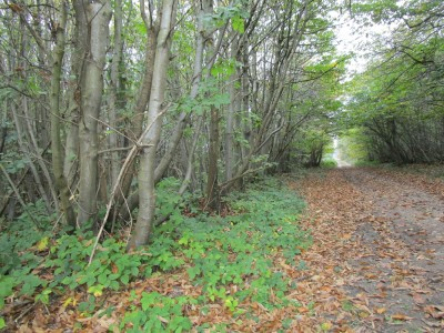 North Downs dog walk and dog-friendly pub, Kent - Driving with Dogs