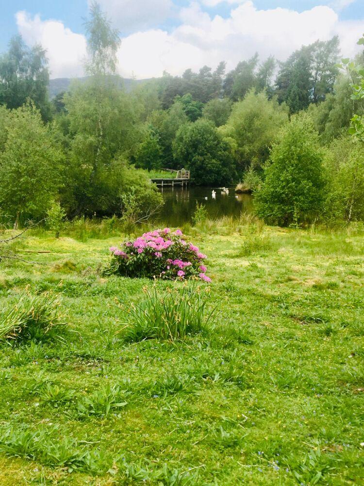 Glebe Nature Reserve, Scotland - 324BA4FD-706F-4CF9-B7A3-899B60BE22A7.jpeg