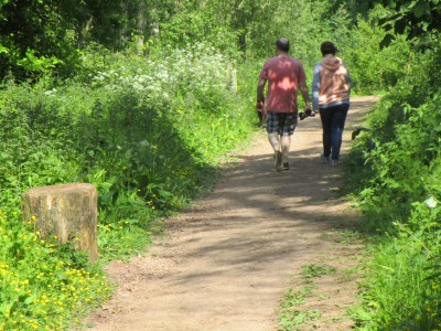 Woodland dog walk and estate walks, Devon - Driving with Dogs