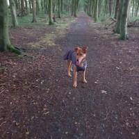 Southern Upland Way dog walk, Scotland - 20180815_192858.jpg