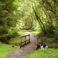M4 junction 45 dog walk near Swansea, Glamorgan, Wales - Dog walks in Wales