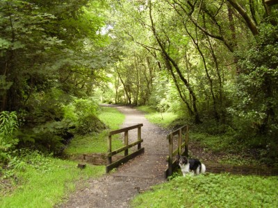 M4 junction 45 dog walk near Swansea, Glamorgan, Wales - Driving with Dogs