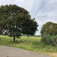 Ferry Meadows dog walk near Peterborough, Cambridgeshire
