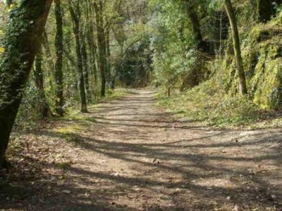 Woodland and riverside dog walk near Plymouth, Devon - Driving with Dogs