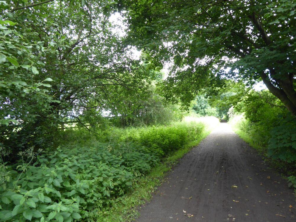 A689 Accessible dog walk on an old railway, County Durham - Dog walks near Bishop Auckland