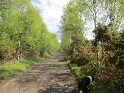 Woodland wander with the dog near Thorpeness, Suffolk - Driving with Dogs