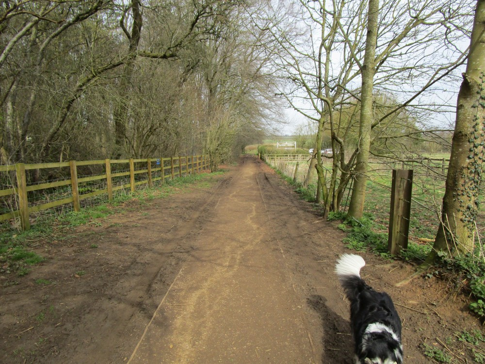 Stoke Woods (near Bicester) dog walk, Oxfordshire - dog walk in Oxfordshire