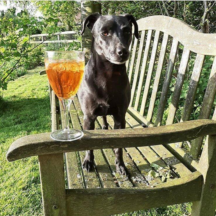 Dog-friendly pub with B&B near York, North Yorkshire - Dog-friendly pub near York
