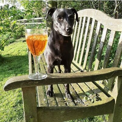 Dog-friendly pub with B&B near York, North Yorkshire - Driving with Dogs