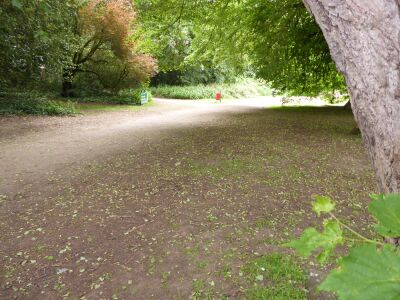 Hartsholme Country Park dog walk, Lincolnshire - Driving with Dogs