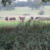 A4 dog friendly pub and dog walk near Newbury, Berkshire - Berkshire dog walk and dog friendly pub