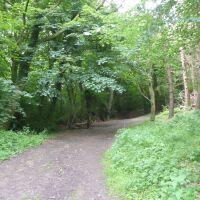 Quiet woodland dog walk, North Yorkshire - Yorkshire dog walks