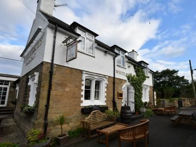 A1 Dog walk and dog-friendly pub with good food, Northumberland - Driving with Dogs