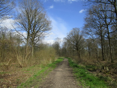 Woodland dog walk and dog-friendly pub, Worcestershire - Driving with Dogs