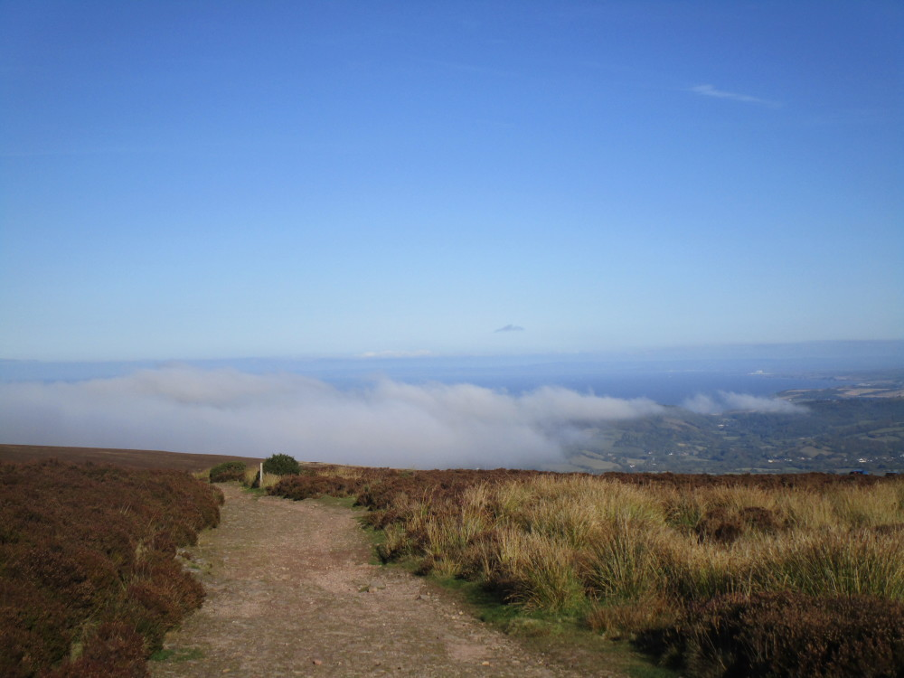 High in the Clouds dog walk, Somerset - Dog walks in Somerset