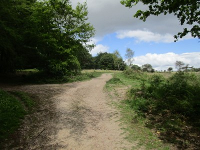 Dog walk in ancient footsteps, Devon - Driving with Dogs