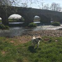 A38 dog-friendly pub and river walk near Culmstock, Devon - Devon dog walk and dog-friendly pub.jpeg