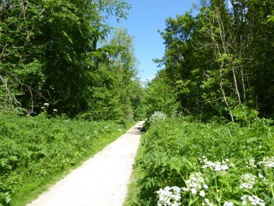 Woodland dog walk and nature trail, East Riding of Yorkshire - Driving with Dogs