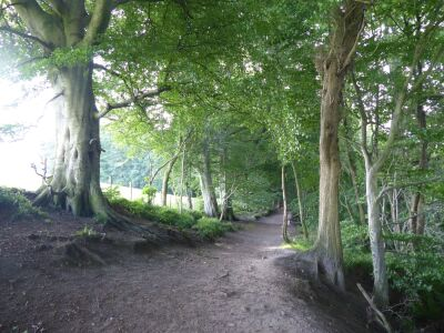 A69 woodland dog walks with splashing river, Cumbria - Driving with Dogs